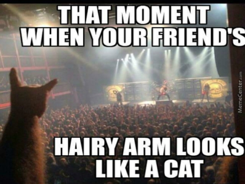 metal-cat-is-metal_o_4678071