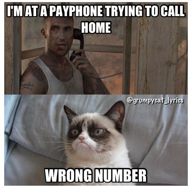 1409e61b81d544039431f22d2d8d2023--funny-kitties-grumpy-cats