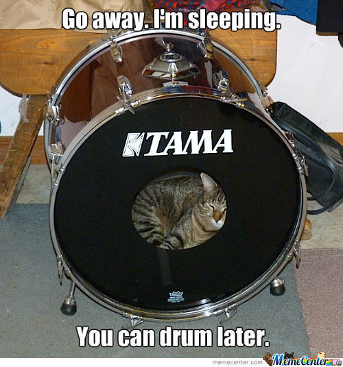 drum-kitty_c_1642635