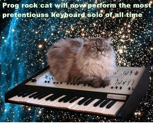 prog-rock-cat-witf-now-petfor-the-most-pretentiouss-keyhoard-solo-29586767