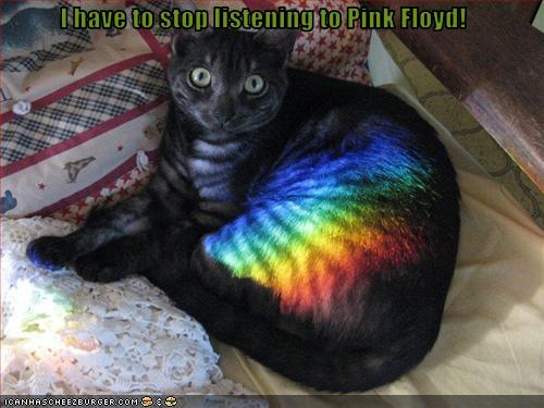 pink_floyd_cat_moment_by_ringostarr911
