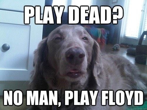 Really-High-Dog-Meme-Wants-Some-Pink-Floyd