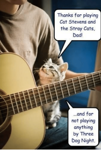 thanks-for-playing-cat-stevens-and-the-stray-cats-dad-33245884