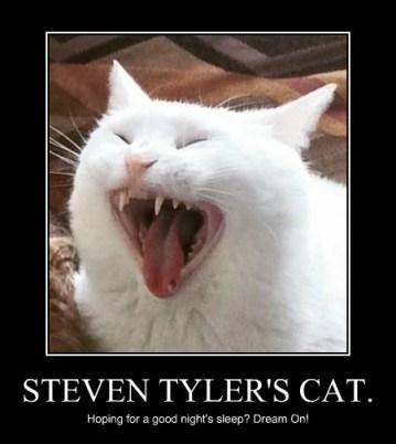 steven-tylers-cat